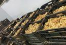 La demanda de jengibre provocada por la COVID ha desaparecido, dejando exceso de oferta en el mercado sudafricano