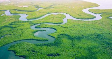 Abordar la pérdida de biodiversidad para lograr un desarrollo verde, resiliente e inclusivo